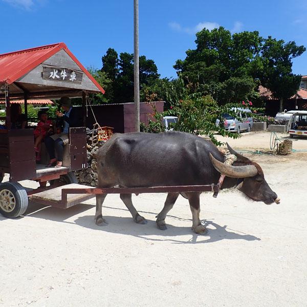 竹富島の水牛車